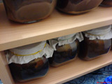Kombucha - Zuchtbehälter in der Wohnung