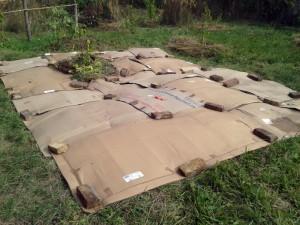 Pappe auf gemähter Wildwiese ausgelegt und mit Ziegelsteinen beschwert - Mulchen als Vorbereitung zur Kultivierung