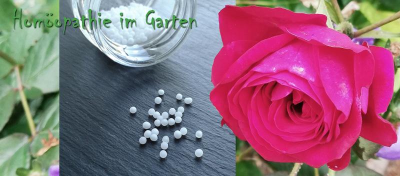 Homöopathie im Garten: Illustration mit Globuli