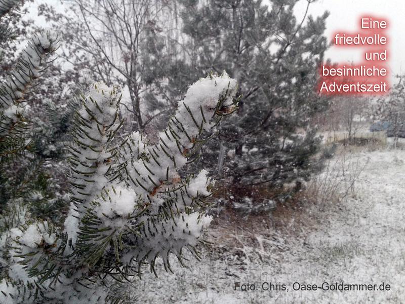 Tannenzweig im Schneefall