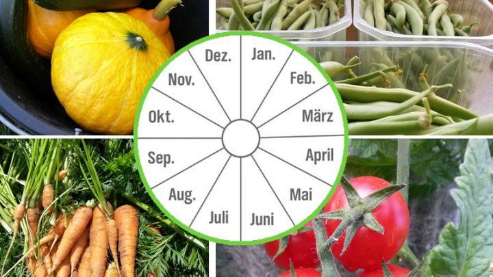 Kalender in Monaten, mit Gartenfrüchten im Hintergrund