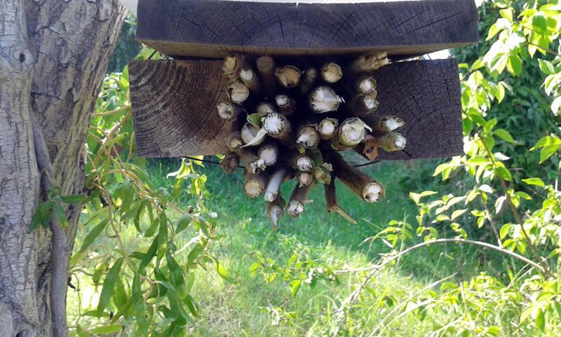 Insektenhotel mit Holunderzweigen hängt an Ast einer Korkenzieherweide