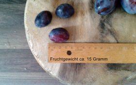 Fruchtgröße und -gewicht der Zwetschen dargestellt
